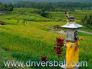 temple for god dewi sri for god of rice field