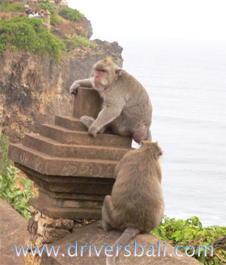 monkey at uluwatu temple bali
